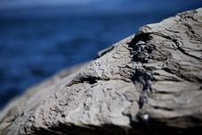 Free Rock On Seacoast Stock Image - 95409441