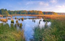 Free Marshes And Reeds Stock Photo - 95409510