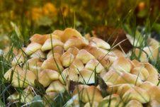 Free Mushroom On Green Grass Stock Image - 95476921