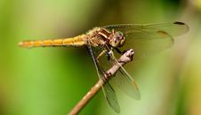 Free Dragonfly Stock Image - 95477071