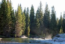 Free Evergreen Forest On River Bank Stock Photography - 95477212