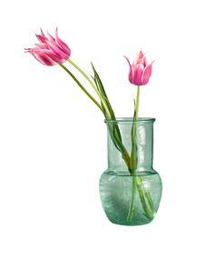Free Three Tulips In Vase Stock Photos - 9550033