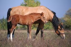 Free Two Horses On The Field Stock Images - 9552104