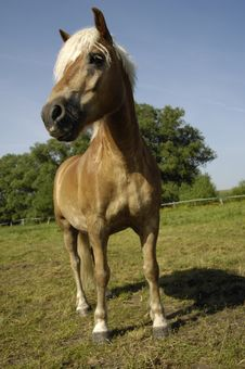 Free Horse On Meadow Stock Photos - 9552413