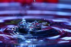 Free Water Drop With Flower In Background Stock Image - 9552781