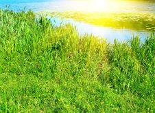 Wonderful Summer Morning And Sunbeams. Royalty Free Stock Photos