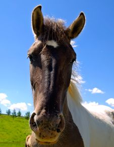Free Horse  On Green Field Stock Images - 9558274
