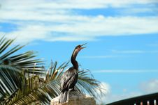 Free Florida Bird Royalty Free Stock Image - 9558926