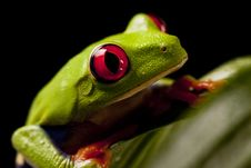 Free Frog On Lear Royalty Free Stock Photos - 9559338