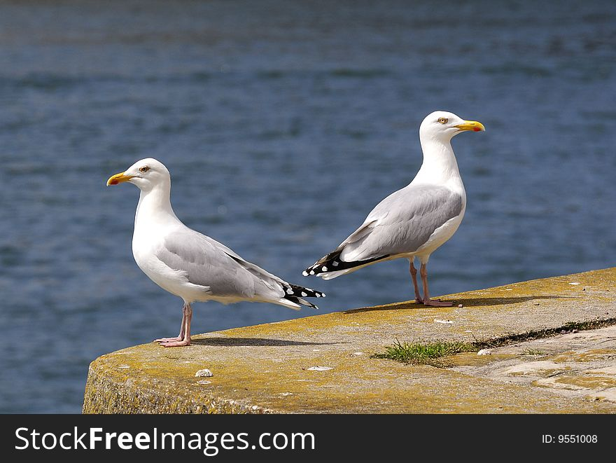 Couple of seagull watching in the habour