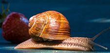 Free Snails And Slugs, Molluscs, Snail, Invertebrate Stock Image - 95521771