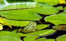 Free Water, Ranidae, Fauna, Vegetation Stock Images - 95521784