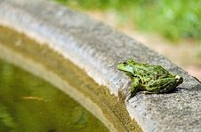 Free Fauna, Reptile, Lacertidae, Scaled Reptile Royalty Free Stock Photo - 95522775