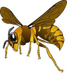 Free Insect, Honey Bee, Invertebrate, Yellow Stock Image - 95523601