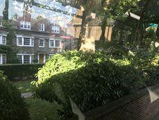 Free Property, Tree, Plant, Vegetation Royalty Free Stock Photo - 95536755