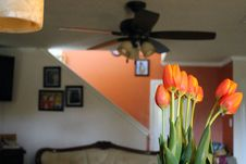 Free Tulips Inside Home Royalty Free Stock Photo - 95536815