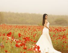 Free Bride In Field Of Poppies Royalty Free Stock Image - 95593476