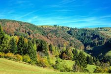 Free Forest On Hillside Royalty Free Stock Photos - 95593488