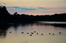 Free Ducks On Lake Royalty Free Stock Photo - 95593545
