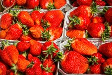 Free Fresh Red Strawberries Stock Image - 95593581
