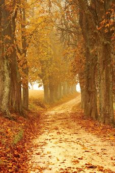 Free Path Through Autumn Forest Stock Image - 95593601