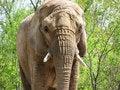 Free Elephant Stock Photos - 9560893
