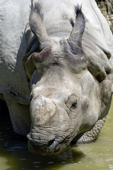 Free Rhino Stock Photography - 9560932