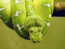 Free Snake Stock Photos - 9560933