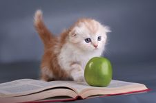 Free Kitten, The Book And  Green Apple Royalty Free Stock Photos - 9561578