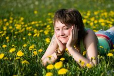 Free Dandelions Glade Royalty Free Stock Images - 9561989
