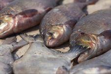 Free Fish Stock Photo - 9562530