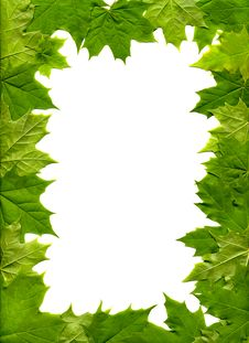 Free Maple Leaves Stock Photos - 9563633