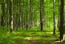 Free Forest Royalty Free Stock Image - 9566126