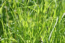 Free Green Grass Summer Royalty Free Stock Photo - 9566845