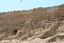 Swallow Nests And Swallows Flying Stock Image