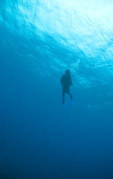 Free Diver Silhouette Stock Photos - 9568443