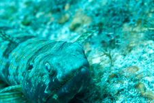 Free Lizard Fish Stock Photography - 9568592