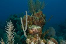 Free Reef And Sea Fans Stock Photo - 9568750