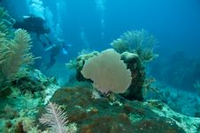 Reef, Sea Fans And Divers Royalty Free Stock Images