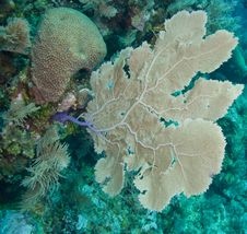 Reef And Sea Fans Royalty Free Stock Images