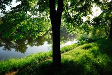 Free Tree And Trail Royalty Free Stock Photo - 9569485