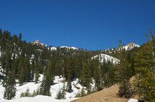 Saddle Mountian Peak And Pine Trees Stock Photography
