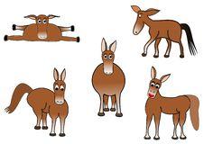 Free Donkeys Stock Photography - 9569792