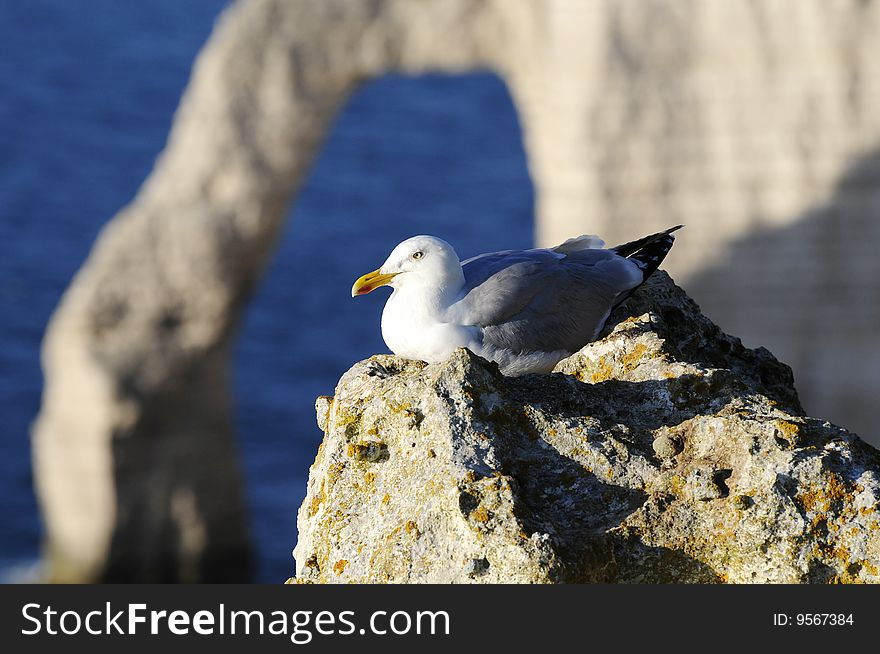 Seagull in the Mountain cliff
