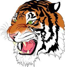 Free Tiger, Face, Facial Expression, Mammal Stock Photography - 95607812