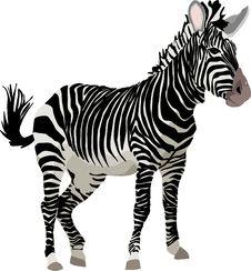 Free Zebra, Wildlife, Terrestrial Animal, Mammal Stock Photography - 95607932