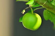 Free Fruit, Apple, Granny Smith, Fruit Tree Royalty Free Stock Images - 95608519