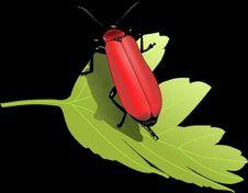 Free Insect, Invertebrate, Beetle, Arthropod Royalty Free Stock Photo - 95610245