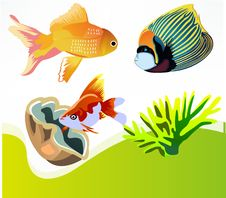Free Fish, Fauna, Organism, Marine Biology Royalty Free Stock Image - 95610536