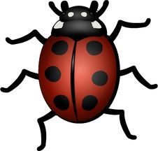 Free Insect, Ladybird, Beetle, Invertebrate Royalty Free Stock Photography - 95611537